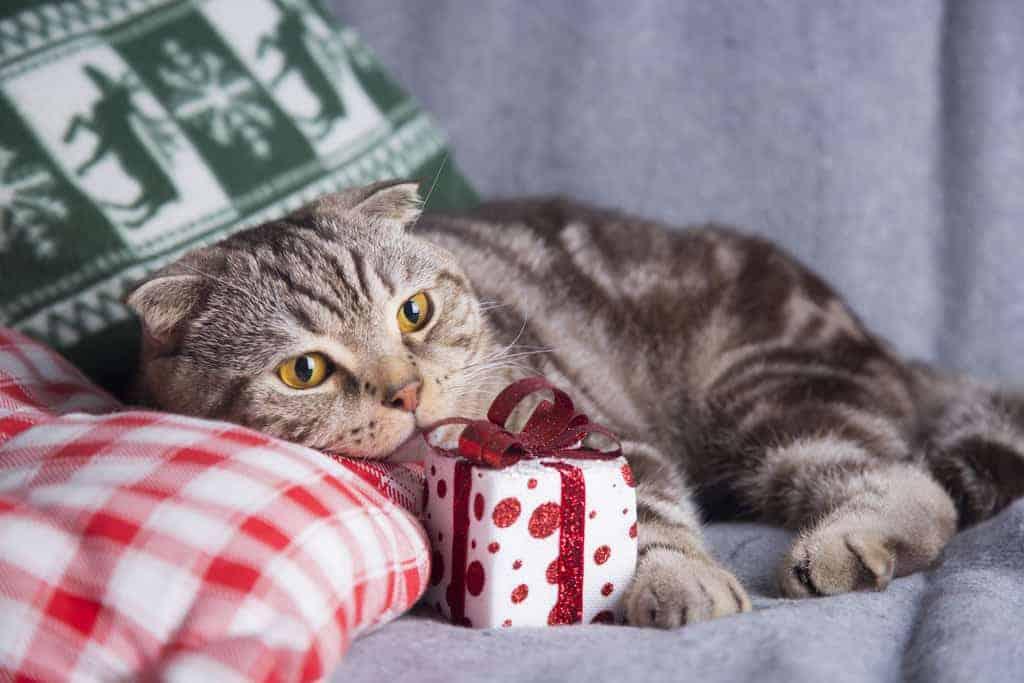 Idee regalo per amanti dei gatti oggetti a forma di gatto for Oggetti regalo