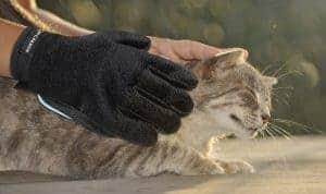 guanto per gatti