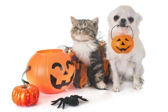 Costumi di Halloween per animali