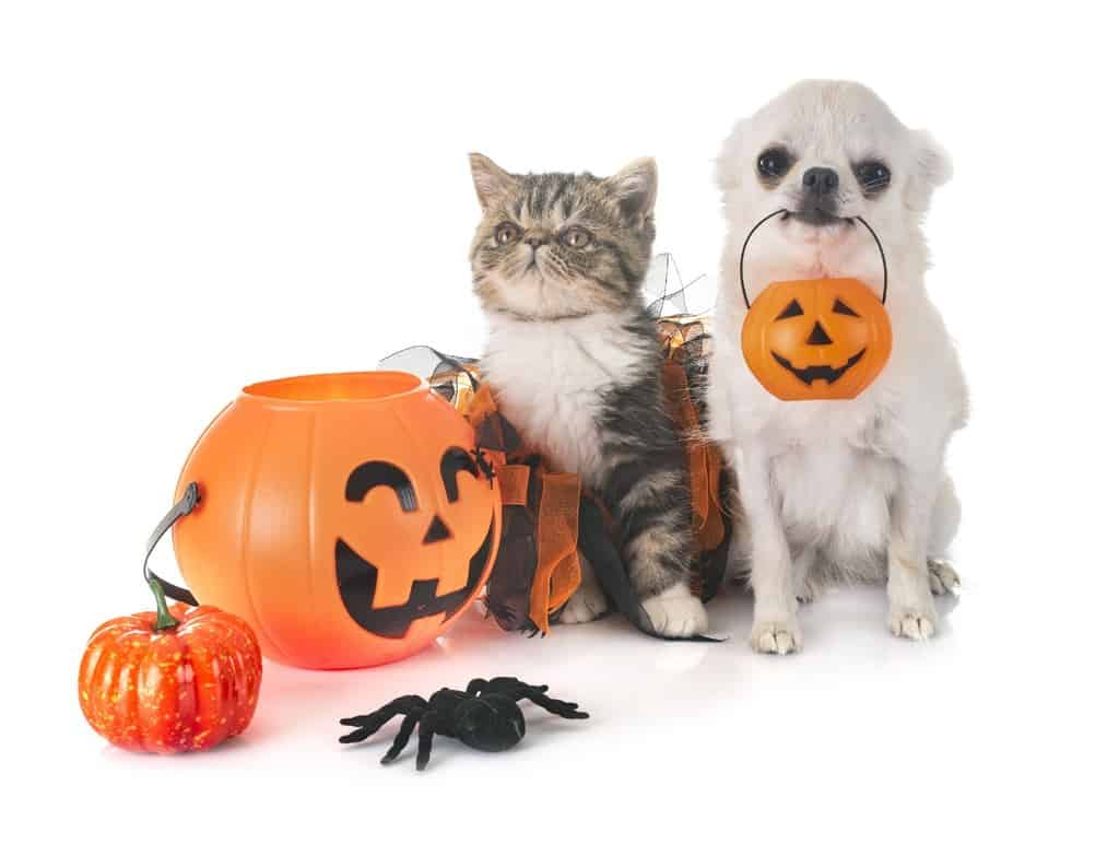 Costumi di Halloween per animali