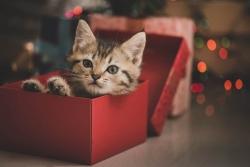 Regali di Natale per Gatti: 10 regali sotto i 50€ che faranno felice il tuo gatto