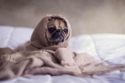 Regali per cani: 5 idee per coccolare i nostri amici a quattro zampe